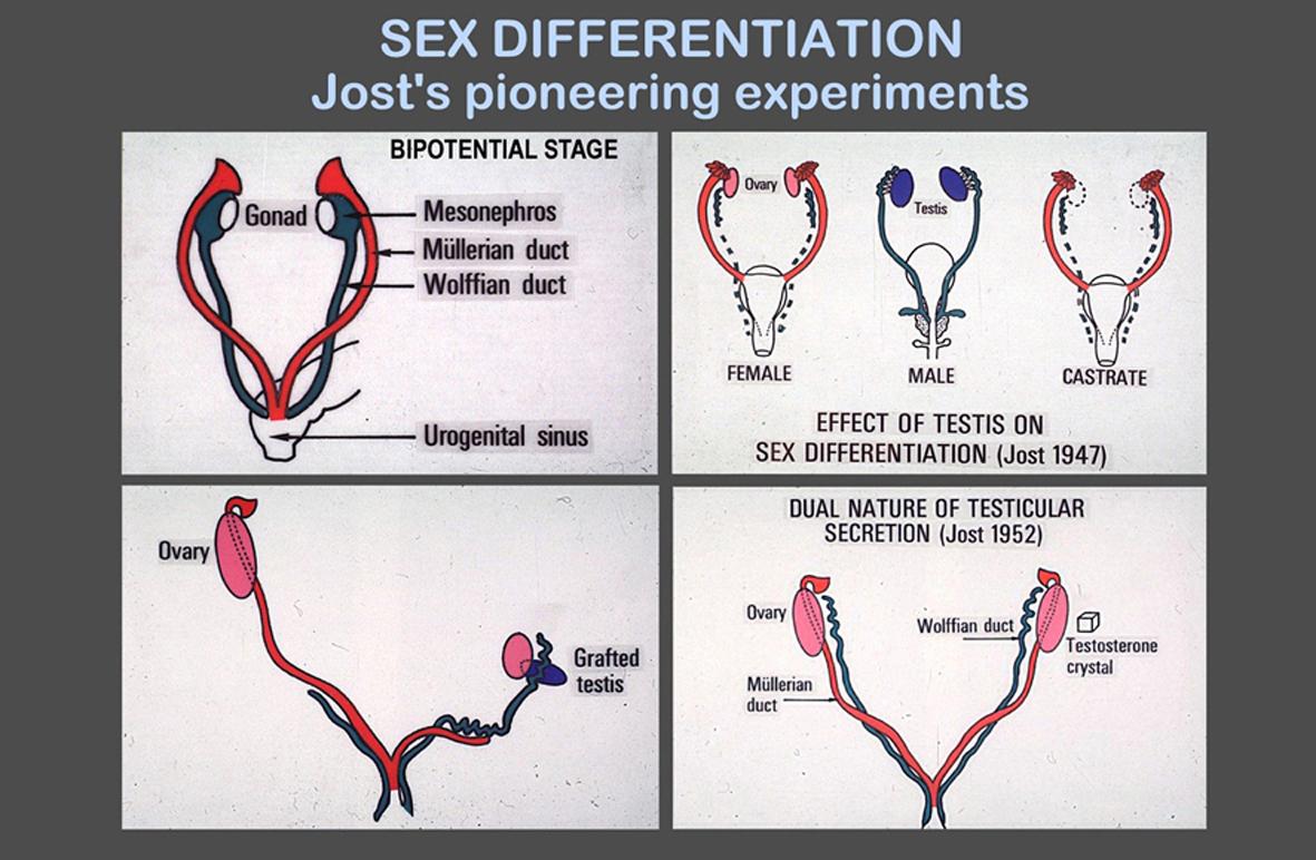 determining fetal sex