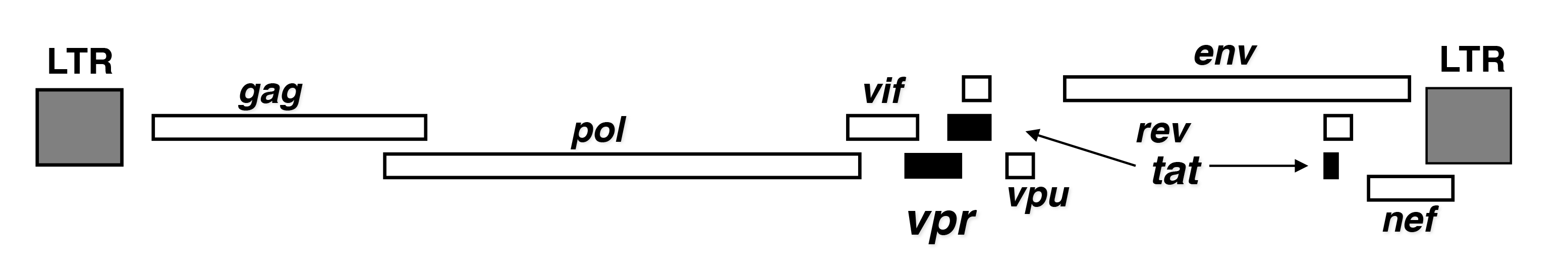 Chapters Archive Page 14 Of 34 Endotext 1966 Mercury Park Lane Wiring Diagram Figure 3 Lineralized Structure The Hiv Genome And Localization Vpr Tat Coding Region Shown In Black Boxes Its 98 Kb Genomic