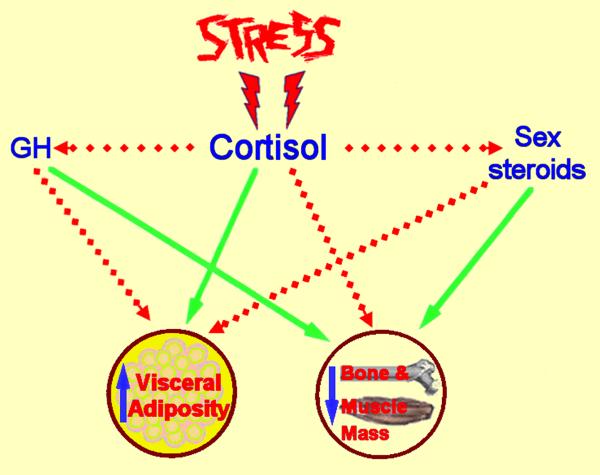 hans selye stress definition deutsch