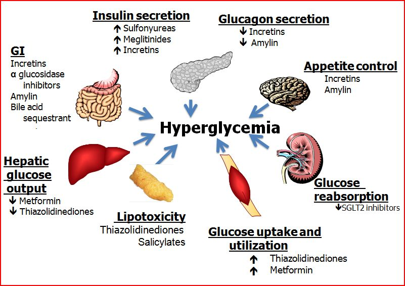 Pharmacological agents for Hyperglycemia | Diabetes Forum