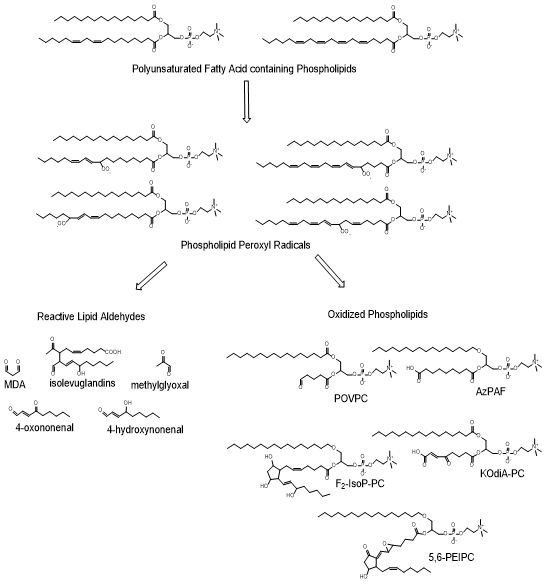 harrison nephrology acid 3rd