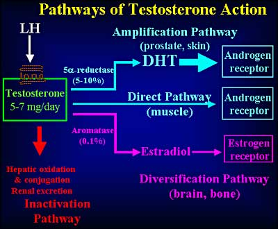 best type of testosterone steroid