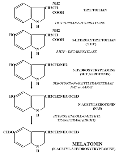 synthesising dmt from tryptophan Fig 6 illustrates 5'-dmt-3'- tryptophan, and histidine (see hayakawa et al method for synthesising templated molecules: us7442160.